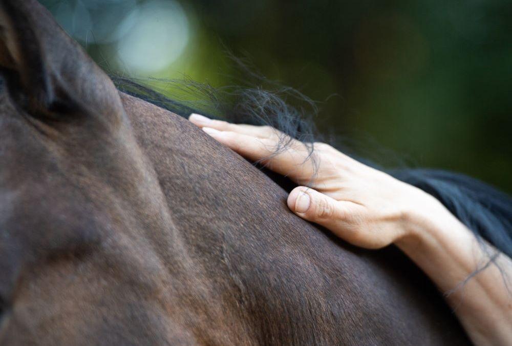Gefühl zwischen Mensch und Pferd