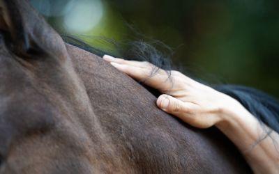Warum eine gute Intuition dir dabei hilft, die Verbindung mit deinem Pferd und deinem Hund zu stärken