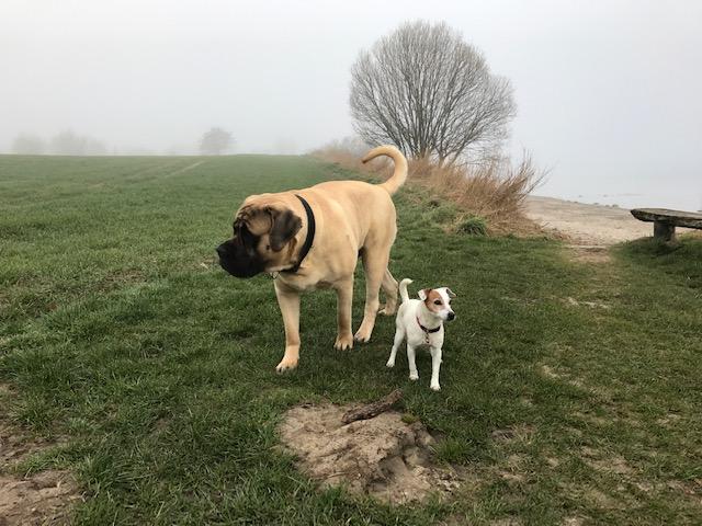 Riesiger Hund links und kleiner Hund rechts - Tierkommunikation