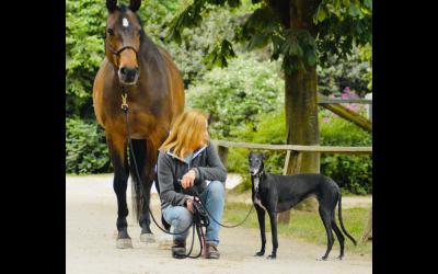 Coaching-Fragen für 9 Alltagssituationen, die dir dabei helfen, dich, dein Pferd und deinen Hund besser zu verstehen